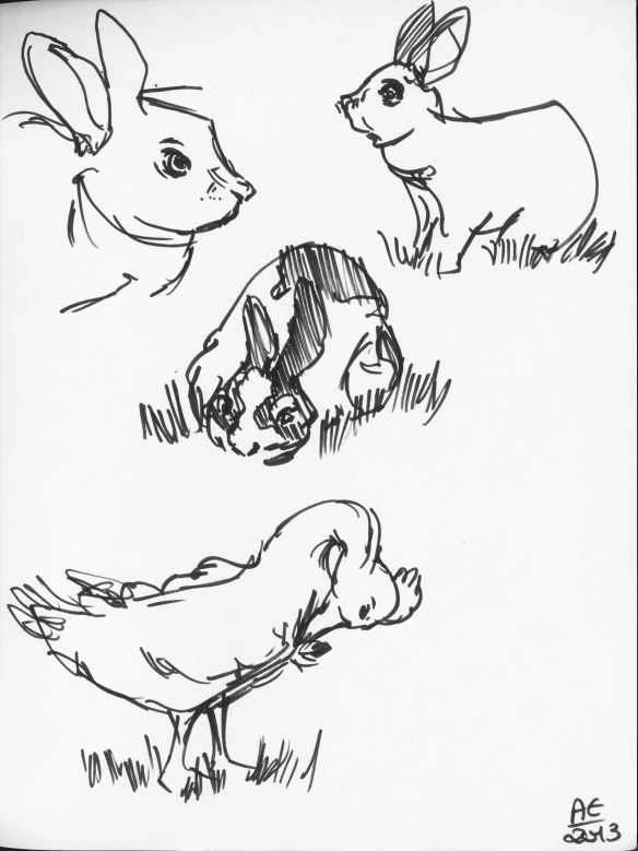 Bunny and Duck Studies