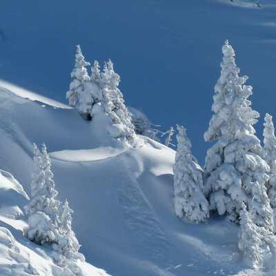 Winterlandschaft_verschneite_Bäume