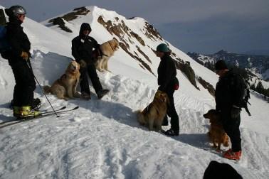 Alpine Meadows rescue dogs
