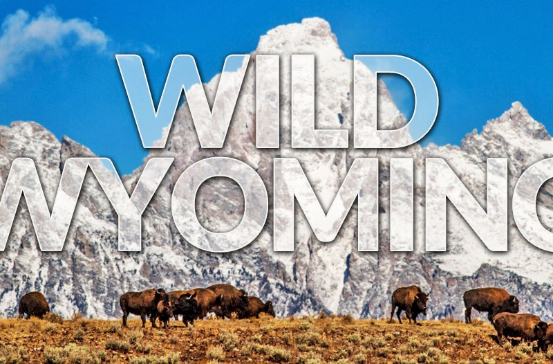 yellowstone trip, yellowstone road trip, yellowstone vacation, jackson hole summer vacation, jackson hole fall vacation.