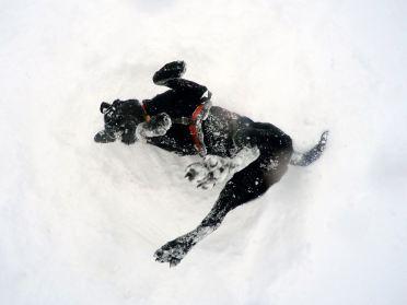 Vail Mountain avi dog, Vail avalanche dog
