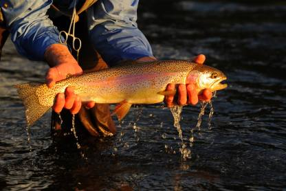 Steamboat Resort trout