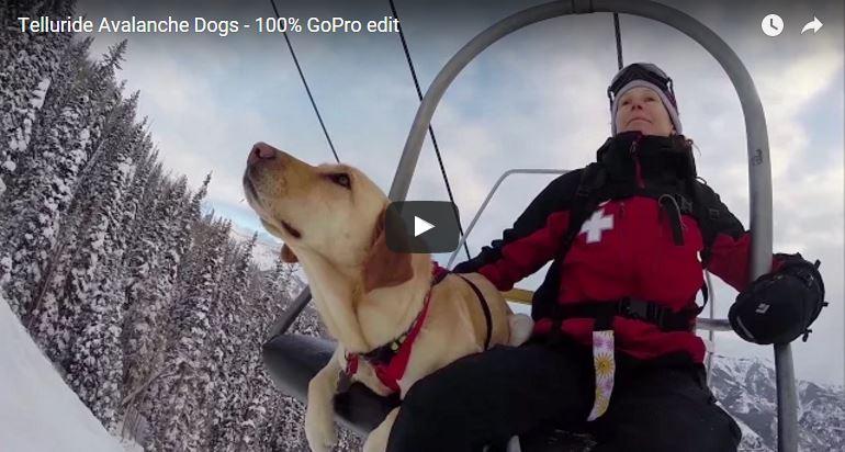 Avi Dogs, Avy Dogs, Avalanche dogs, rescue dogs, avalanche rescue dogs Colorado