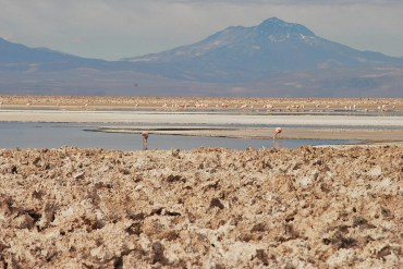 birdwatching Atacama, Atacama flamingos, Andean flamingos, Chilean flamingos