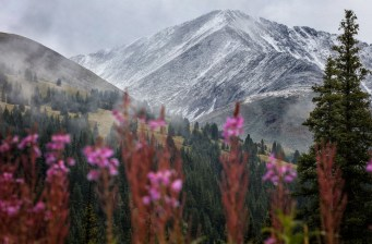 Copper Mountain shows off its summer wildflowers against a backdrop of fresh snow on Aug. 24. | Photo: Tripp Fay, Copper Mountain