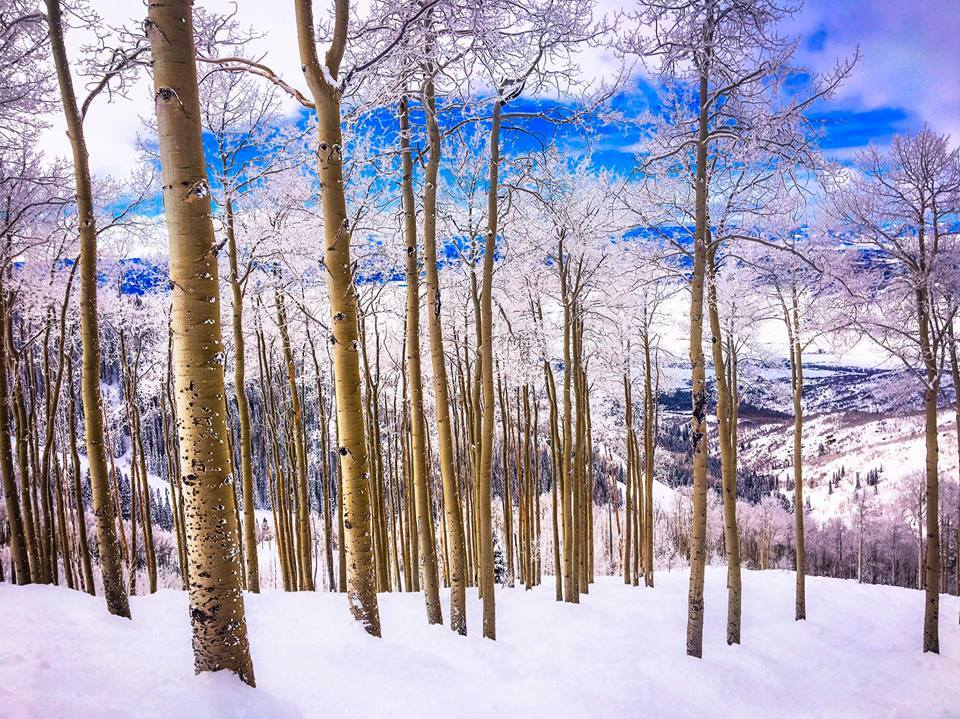 Steamboat glades, steamboat tree skiing