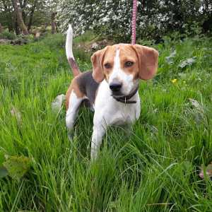 Skibbereen Animal Sanctuary & Rescue Centre - Buddy