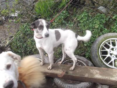 Skibbereen-Animal-Sanctuary-and-Rescue-Centre (1)
