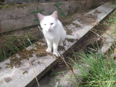 Skibbereen-Animal-Sanctuary-and-Rescue-Centre (10)