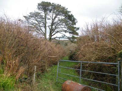 Skibbereen-Animal-Sanctuary-and-Rescue-Centre (127)