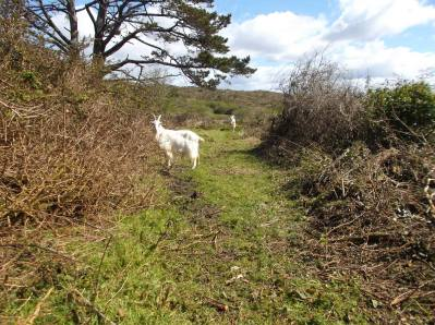 Skibbereen-Animal-Sanctuary-and-Rescue-Centre (133)