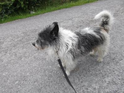Skibbereen-Animal-Sanctuary-and-Rescue-Centre (139)