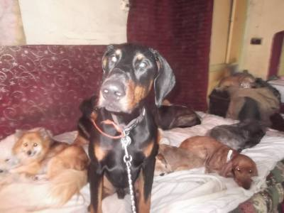 Skibbereen-Animal-Sanctuary-and-Rescue-Centre (16)