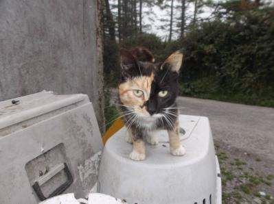 Skibbereen-Animal-Sanctuary-and-Rescue-Centre (173)