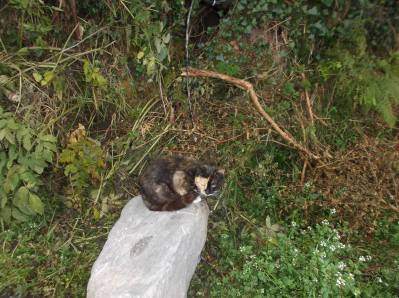 Skibbereen-Animal-Sanctuary-and-Rescue-Centre (183)