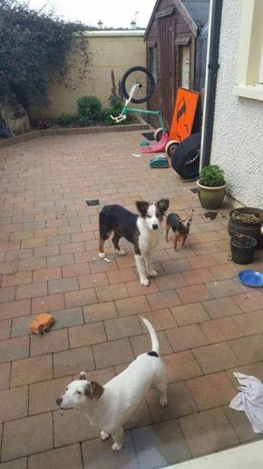 Skibbereen-Animal-Sanctuary-and-Rescue-Centre (212)