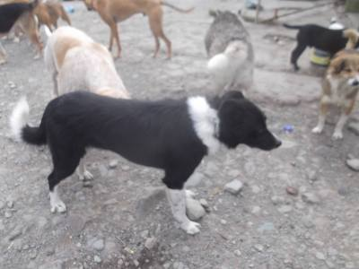 Skibbereen-Animal-Sanctuary-and-Rescue-Centre (22)