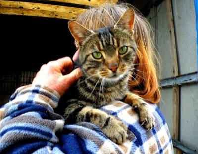 Skibbereen-Animal-Sanctuary-and-Rescue-Centre (235)