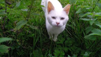 Skibbereen-Animal-Sanctuary-and-Rescue-Centre (267)