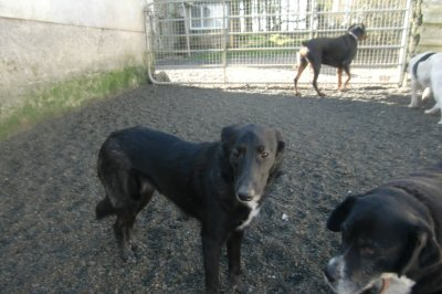 Skibbereen-Animal-Sanctuary-and-Rescue-Centre (288)