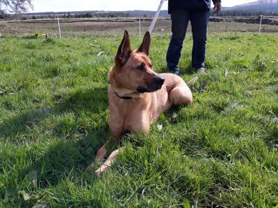 Skibbereen-Animal-Sanctuary-and-Rescue-Centre (298)