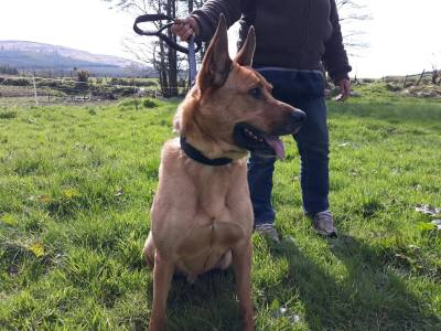 Skibbereen-Animal-Sanctuary-and-Rescue-Centre (299)