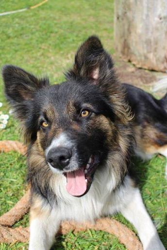 Skibbereen-Animal-Sanctuary-and-Rescue-Centre (305)
