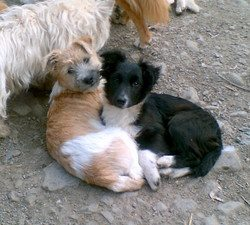 Skibbereen-Animal-Sanctuary-and-Rescue-Centre (313)