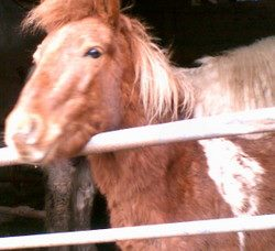 Skibbereen-Animal-Sanctuary-and-Rescue-Centre (327)