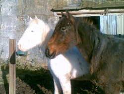 Skibbereen-Animal-Sanctuary-and-Rescue-Centre (337)