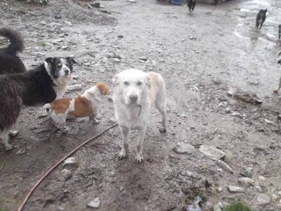 Skibbereen-Animal-Sanctuary-and-Rescue-Centre (347)