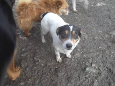 Skibbereen-Animal-Sanctuary-and-Rescue-Centre (353)