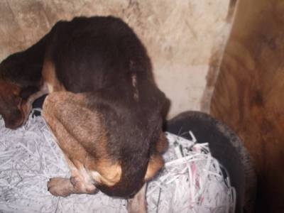 Skibbereen-Animal-Sanctuary-and-Rescue-Centre (374)