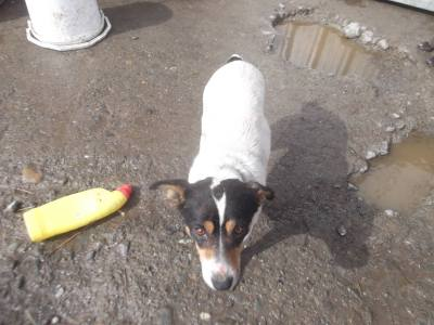 Skibbereen-Animal-Sanctuary-and-Rescue-Centre (388)