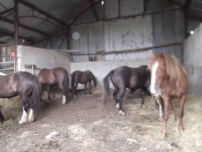 Skibbereen-Animal-Sanctuary-and-Rescue-Centre (404)