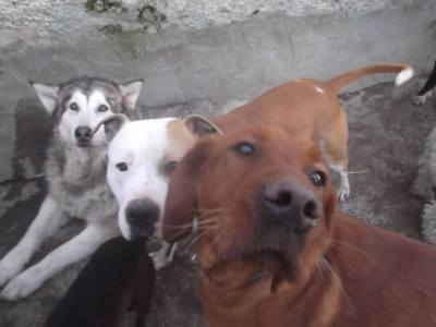 Skibbereen-Animal-Sanctuary-and-Rescue-Centre (69)
