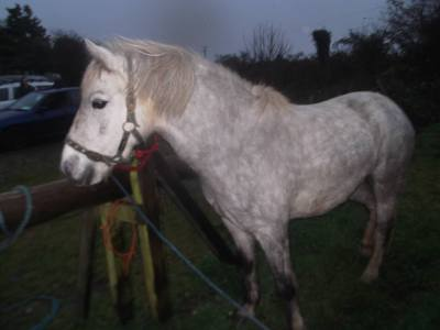 Skibbereen-Animal-Sanctuary-and-Rescue-Centre (93)