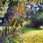kwiatki_29