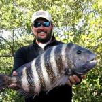 Chris Wiggins with a 12.9 lb sheepshead caught in Tampa Bay