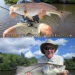 Everglades, catching Redfish and Snook within a few feet with Capt. William H. Faulkner!
