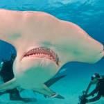 """Pat Ford on """"Playing with Sharks"""""""