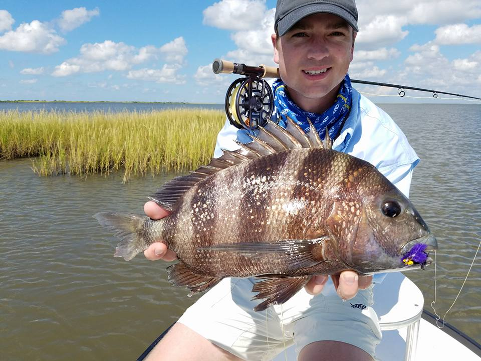 Sheepshead on fly, only in Louisiana with Capt. Ron Ratliff.