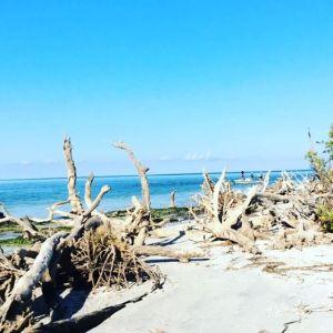 Waves wash gently onshore at Cayo Costa #driftwood #waves #islandlife #beachbum …
