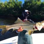 Ruskin, Tampa Snook Fishing ON FIRE!