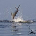 tarpon fishing skifflife pat ford