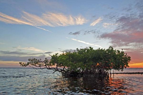 matlacha mangroves snook fishing