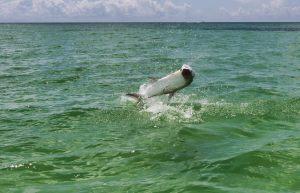 tarpon-fishing-florida-keys