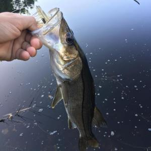 Today in my lunch at work i found a nice fishing spot                  …