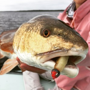 Nose Piercings are FREE to Redfish