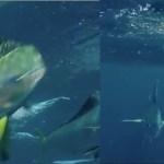 Flying Fish Cool Saltwater Fish